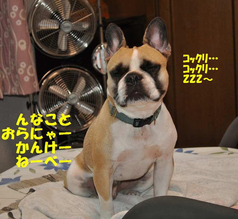 022_20130917101359c7f.jpg