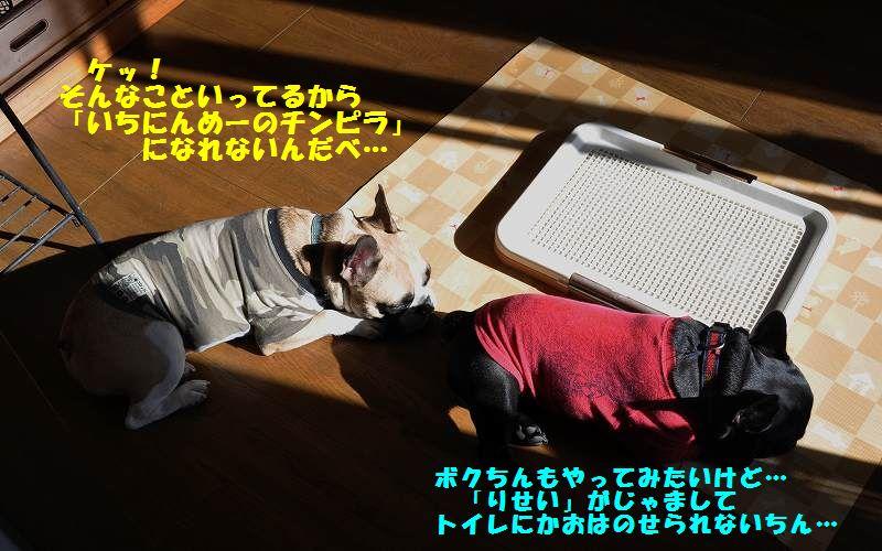055_20131203155200a53.jpg