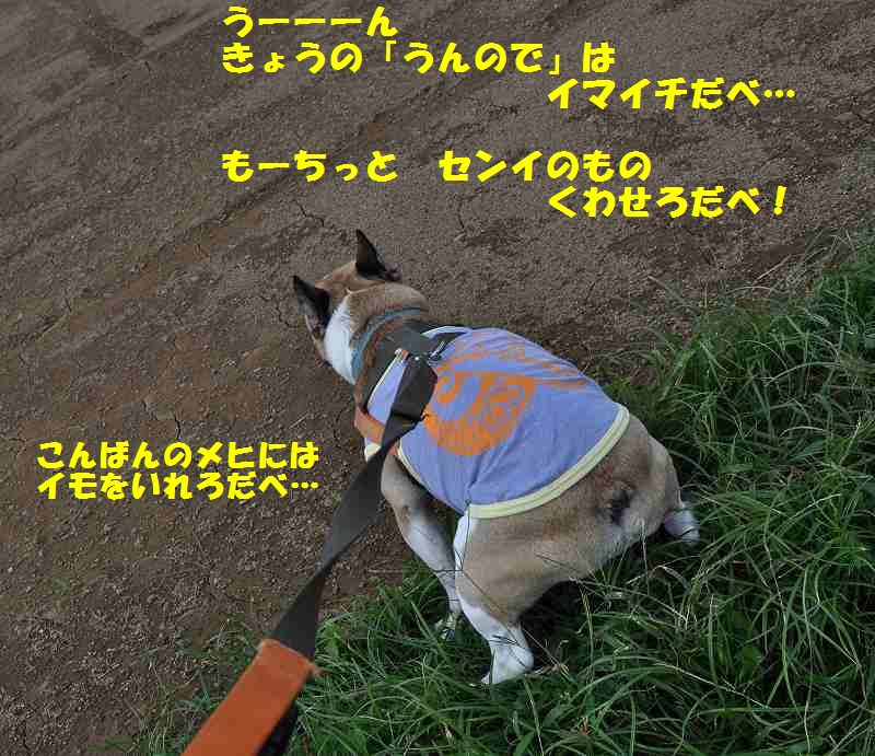 089_20131011093634feb.jpg