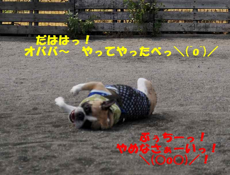 091_201310021339524e4.jpg