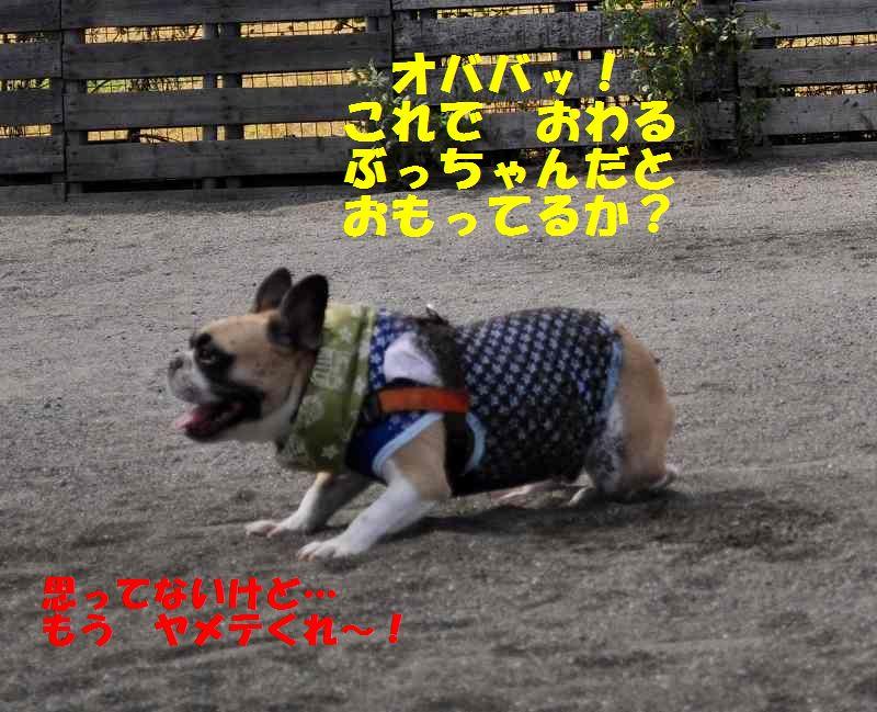 092_20131002133957c7d.jpg