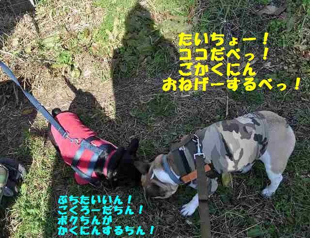 093_201312041546444ec.jpg