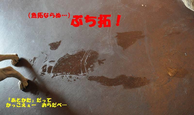 104_201310021340517eb.jpg