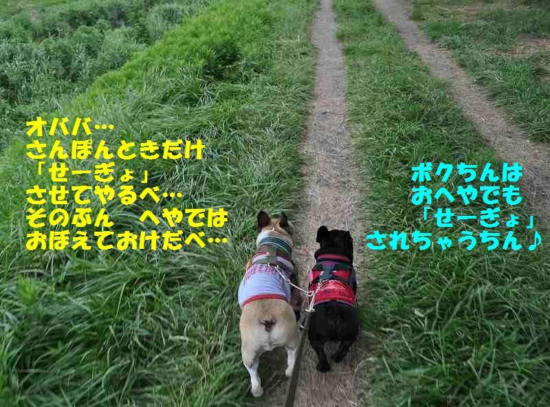 106_20130725092720.jpg