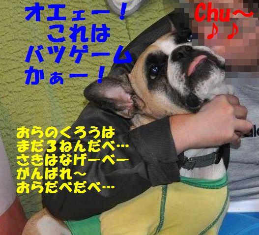 106_201312121550276d0.jpg