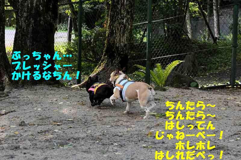 147_20130911141801b7c.jpg