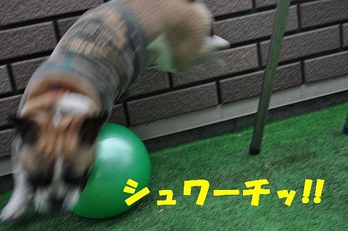 36d7fced66b916a9d6ad-L[1]
