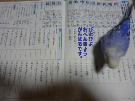 P1030956.jpg