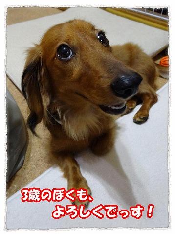 2013_10_13_4.jpg