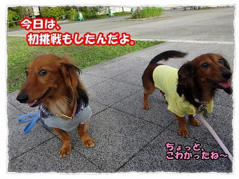 2013_10_1_1.jpg