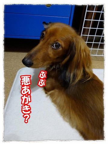 2013_10_25_3.jpg