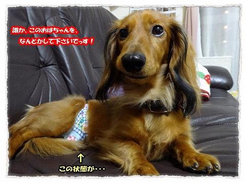2013_11_15_3.jpg