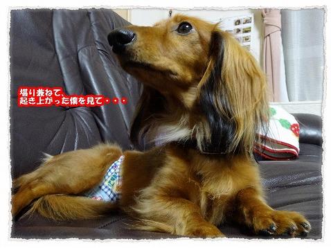 2013_11_15_4.jpg
