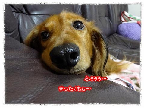 2013_11_15_5.jpg