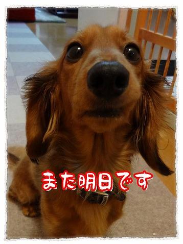 2013_4_11_1.jpg