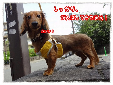 2013_4_13_5.jpg