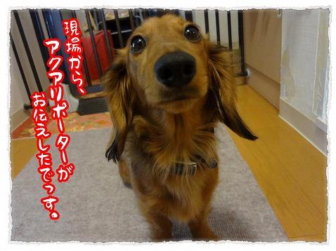 2013_4_15_1.jpg
