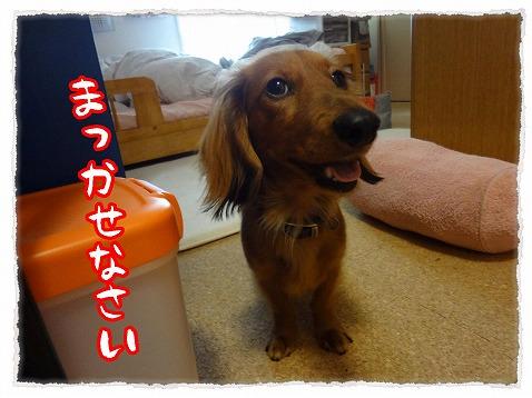 2013_4_15_4.jpg