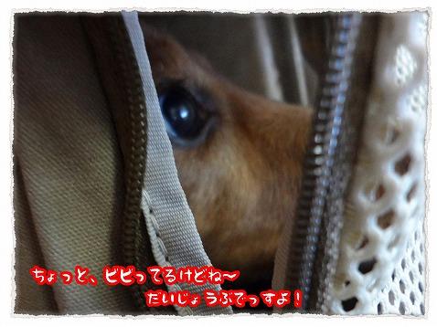 2013_4_16_2.jpg