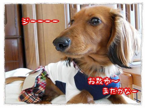 2013_4_19_3.jpg
