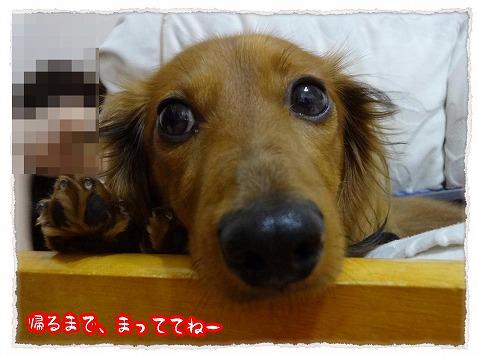 2013_4_21_1.jpg