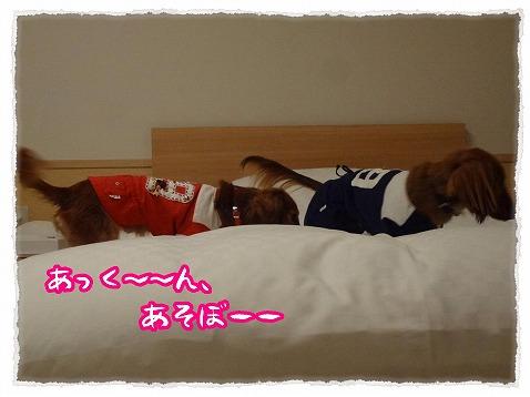 2013_4_23_4.jpg
