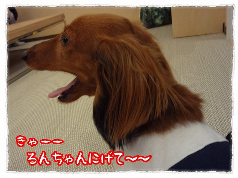 2013_4_26_7.jpg