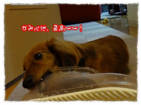 2013_4_5_2.jpg