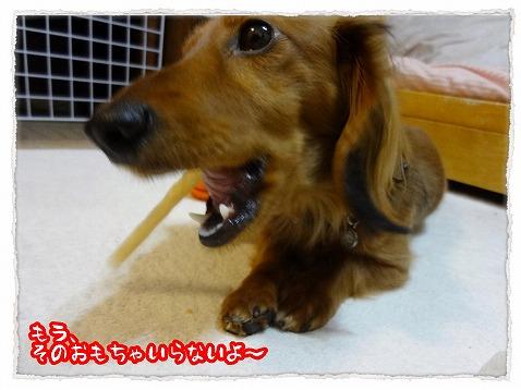 2013_4_5_5.jpg