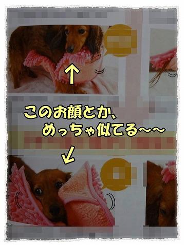 2013_4_8_12.jpg