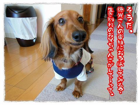 2013_4_8_4.jpg