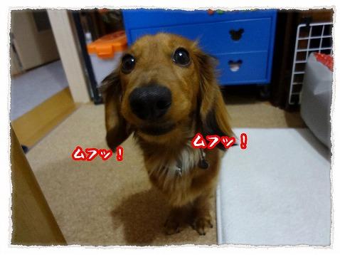 2013_4_9_4.jpg
