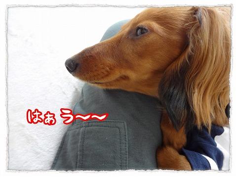 2013_5_11_4.jpg
