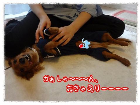 2013_5_11_5.jpg