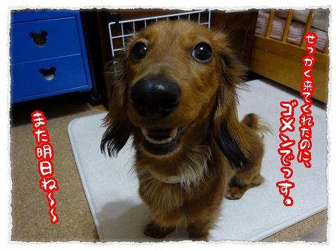 2013_5_16_1.jpg