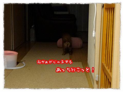 2013_5_18_5.jpg