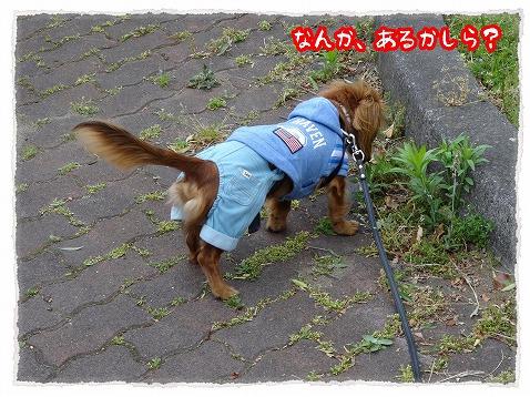 2013_5_20_4.jpg