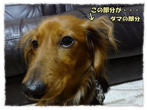 2013_5_2_3.jpg
