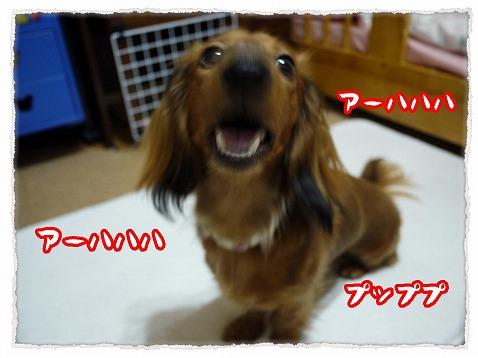 2013_5_31_5.jpg