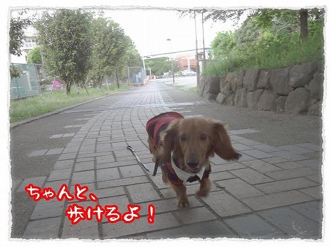 2013_5_4_2.jpg