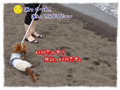 2013_6_10_1.jpg