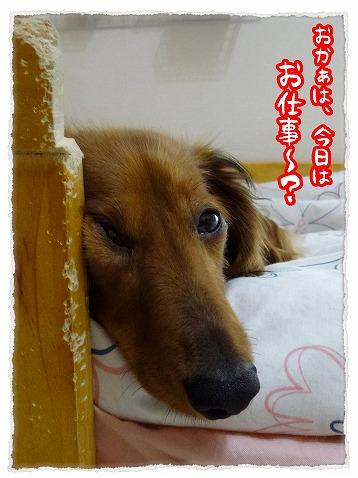 2013_6_18_1.jpg