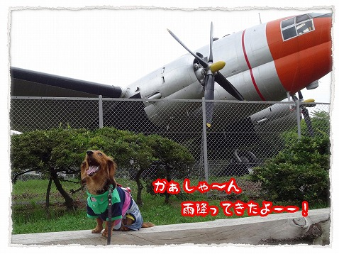 2013_6_25_2.jpg