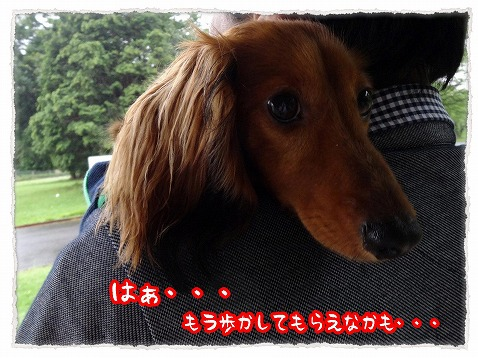 2013_6_25_3.jpg