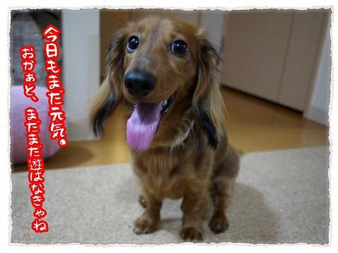 2013_6_5_1.jpg