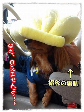 2013_7_10_3.jpg