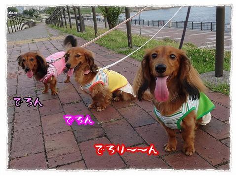 2013_7_13_4.jpg