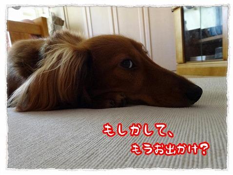2013_7_17_2.jpg
