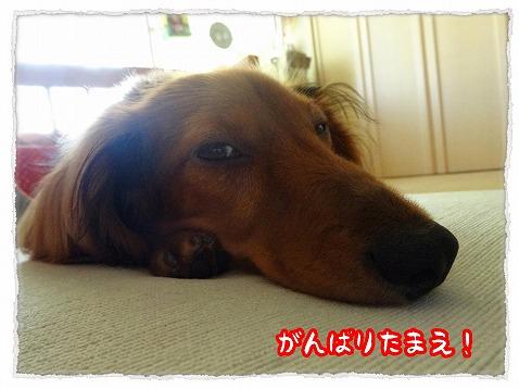2013_7_17_4.jpg