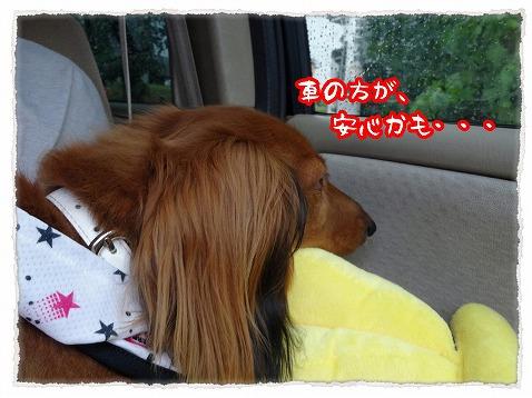 2013_7_23_4.jpg